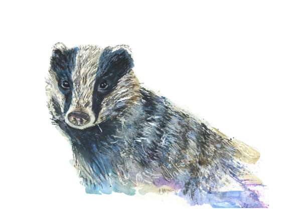 Badger - Art For Happy Homes | Joan Kennedy Artist