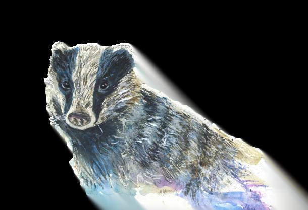 Badger - Art For Happy Homes | Joan Kennedy Artist