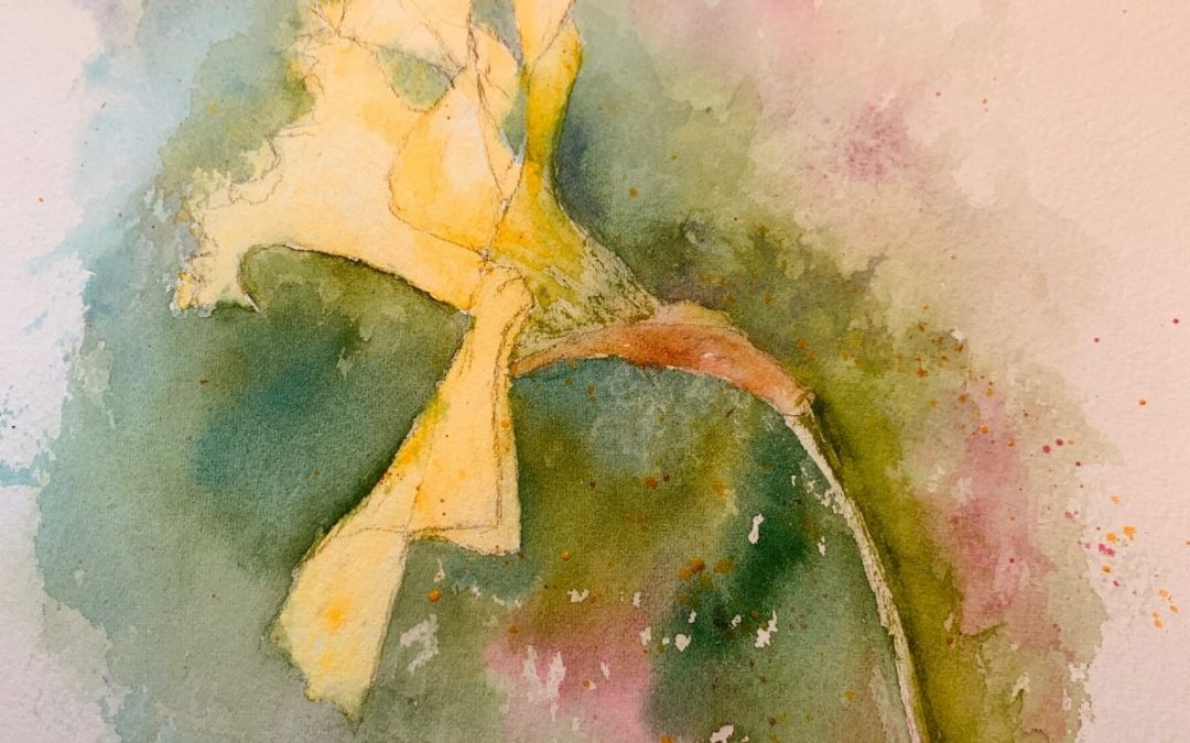 A Watercolour Daffodil