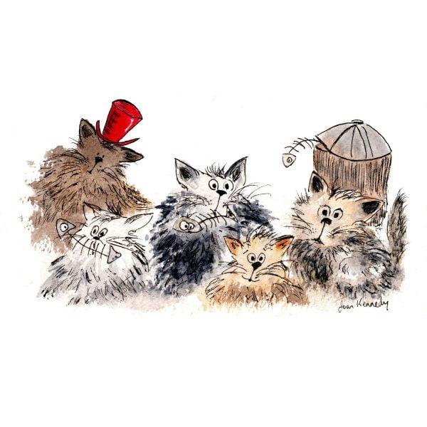 ally cats