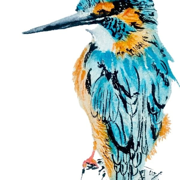 Kingfisher pen and ink